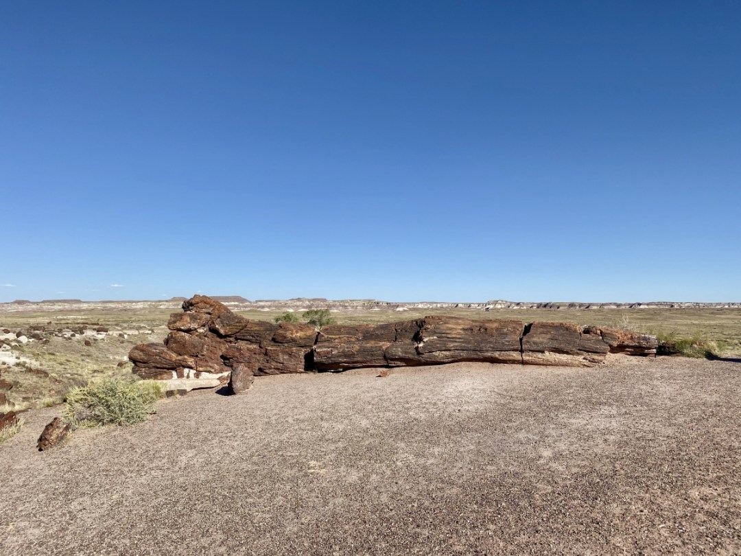 Old Faithful Petrified Forest NP - Drive the Painted Desert & Petrified Forest National Park