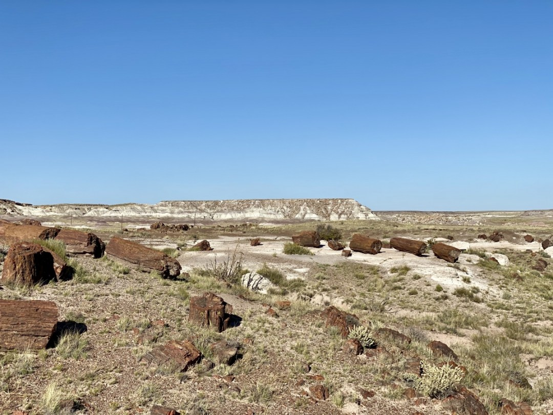 Rainbow Forest Petrified Forest NP - Drive the Painted Desert & Petrified Forest National Park