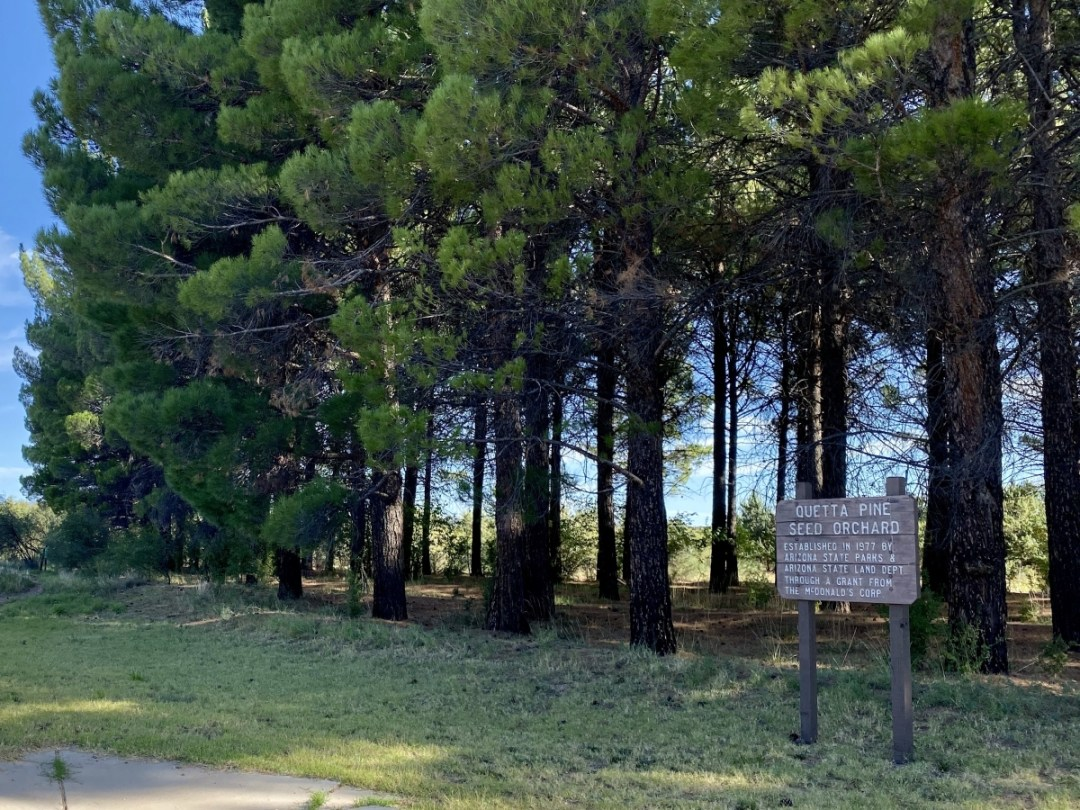 Dead Horse Ranch State Park Quetta pines - 7+ Amazing Attractions in Verde Valley AZ