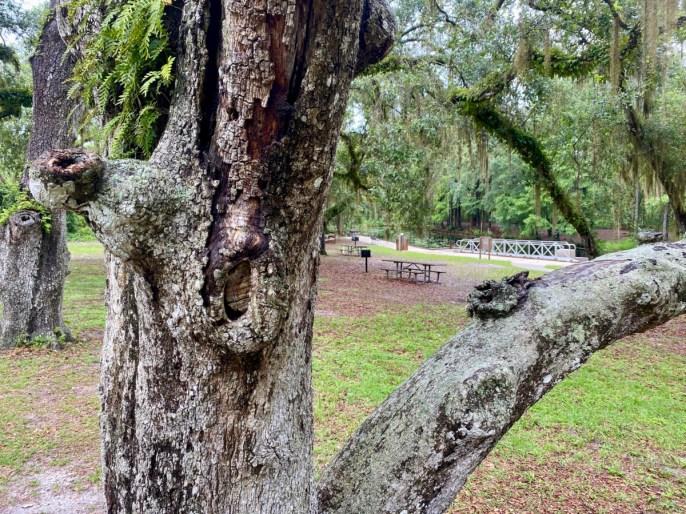 oak tree bark - Discover Lake County Florida Outdoor Adventures
