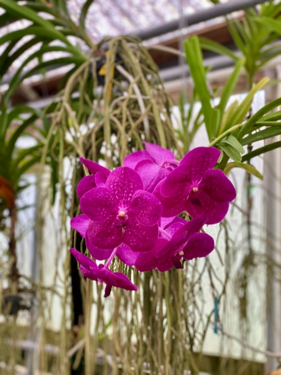 purple orchid - Discover Lake County Florida Outdoor Adventures