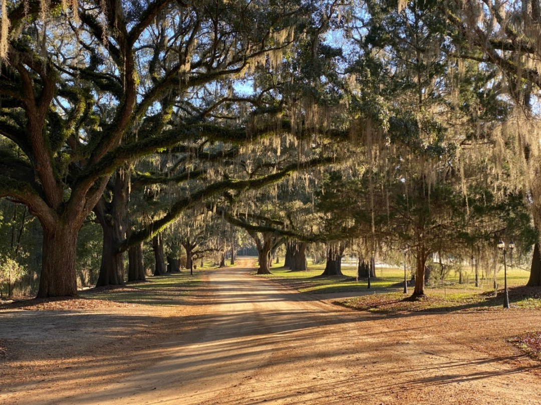 South Eden oak alley - Encounter Historic Quail Hunt Plantations in Thomasville GA