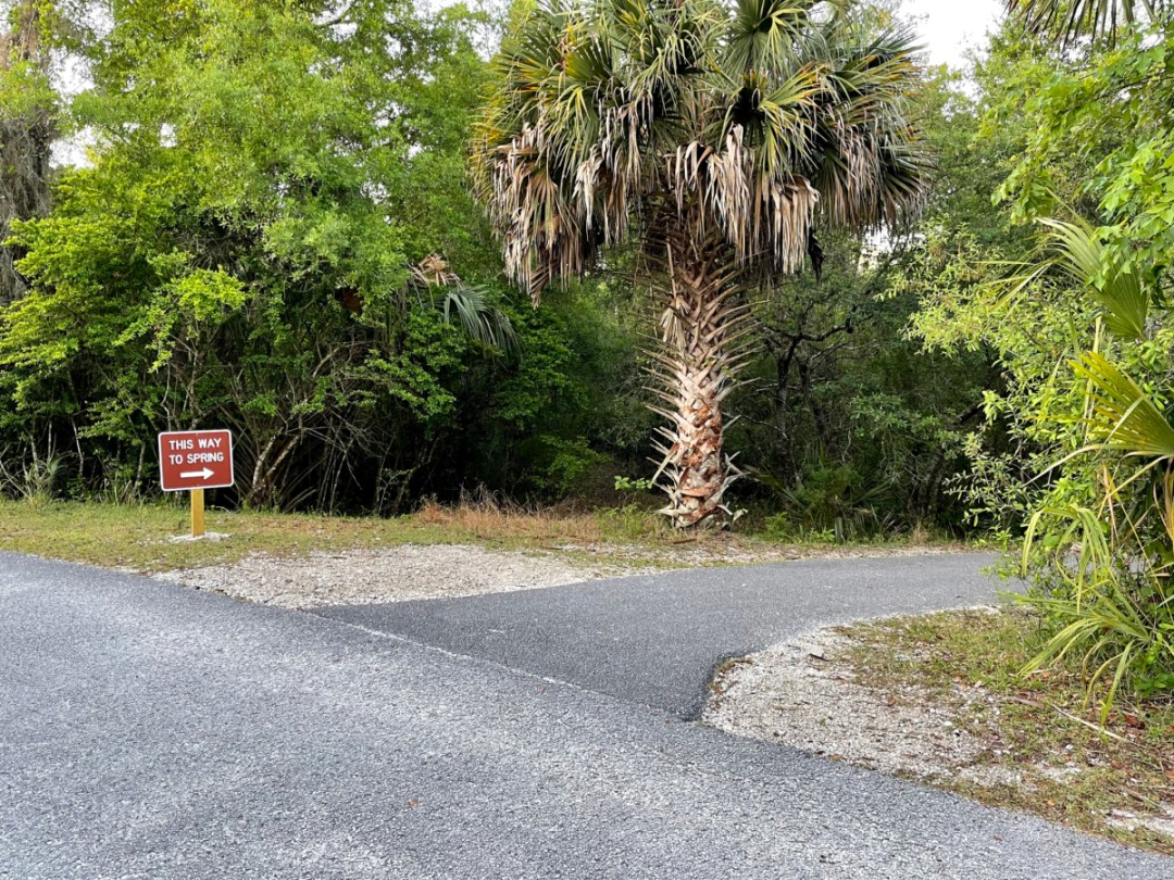 Blue Spring SP trail to spring - Discover Florida's Blue Spring State Park & Campground