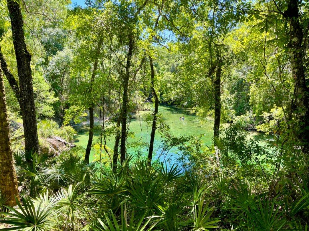 Blue Spring through trees - Discover Florida's Blue Spring State Park & Campground