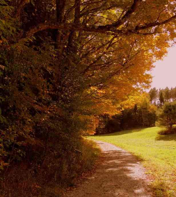 A path through woods and fields during fall foliage season in Vermont