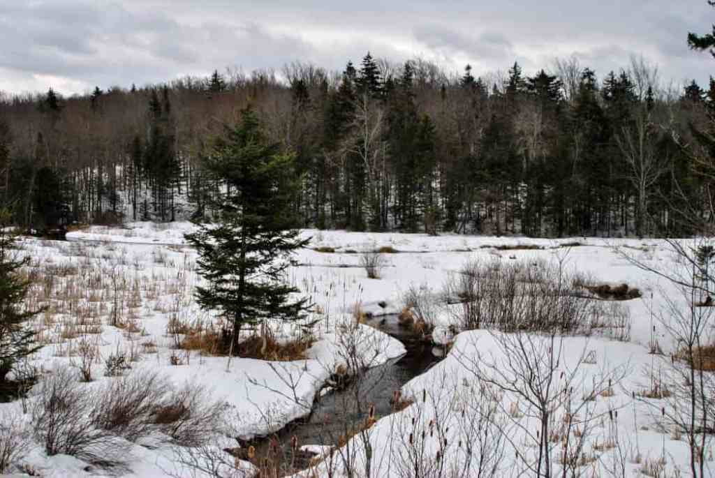 A winter scene in Woodford State Park