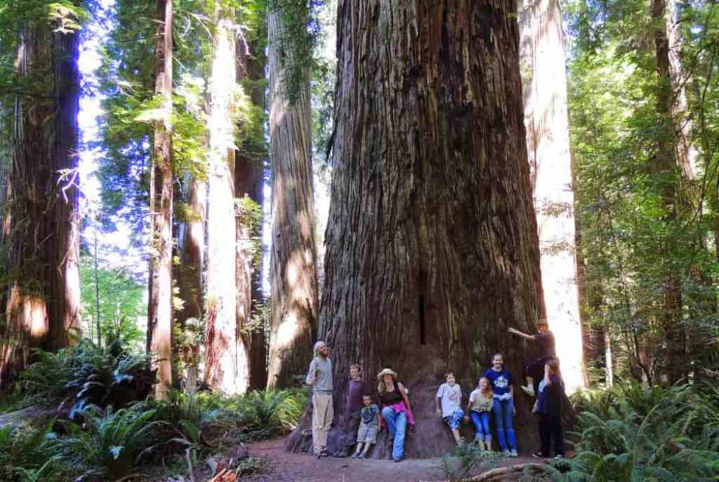 A group of people stand under a giant redwood tree in Jedediah Smith State Park