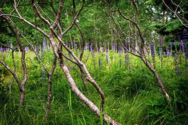 Wildflower hikes Maine
