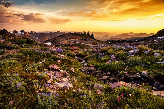 Wildflower Hikes Washington