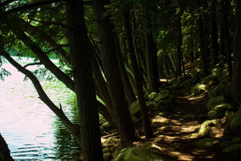 Emerald Lake Trails