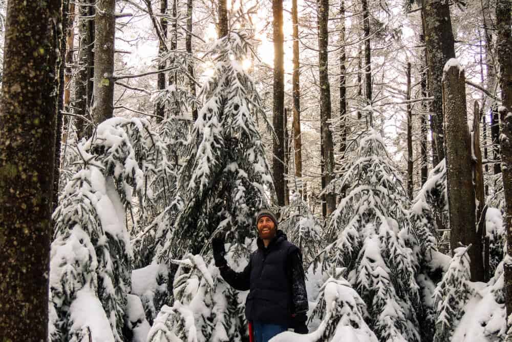 Fall In Love With Your National Forest Christmas Tree