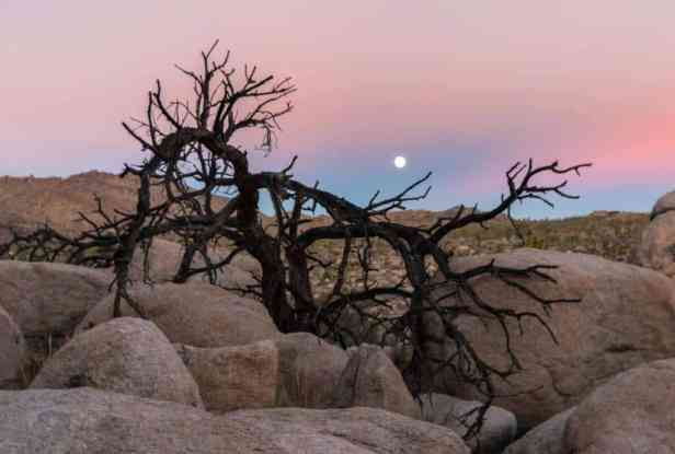 Joshua Tree National Park for Families