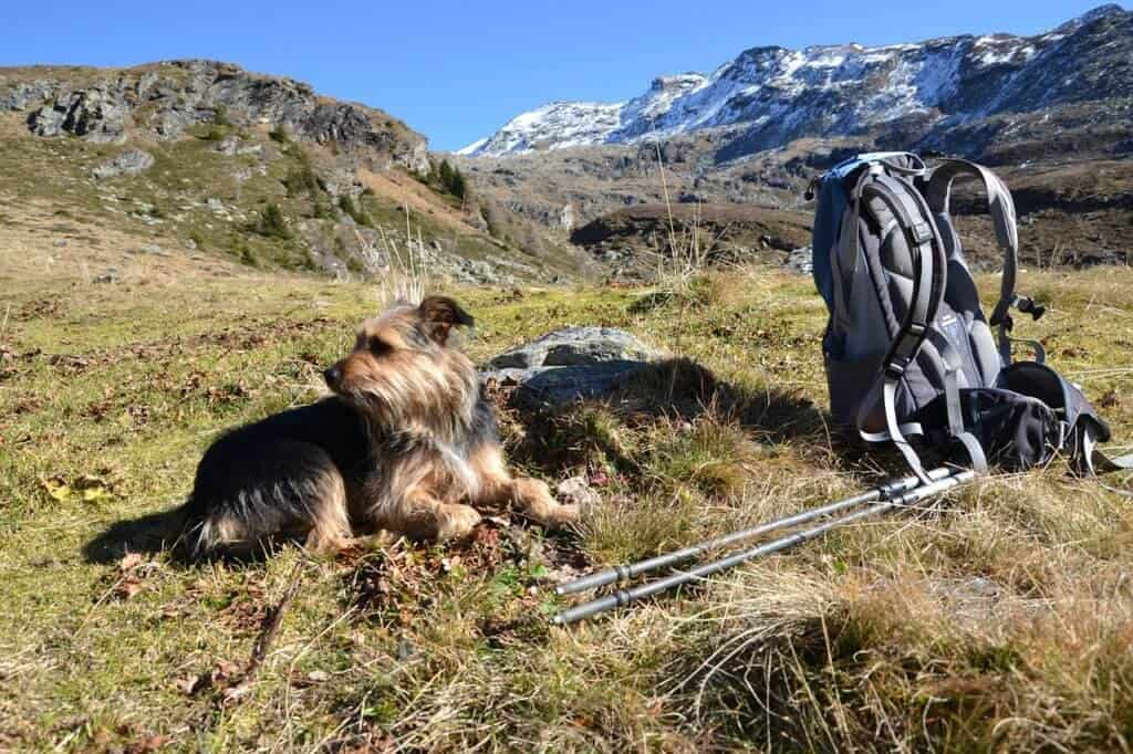 A small terrier lies next to a hiking backpack in the mountains.