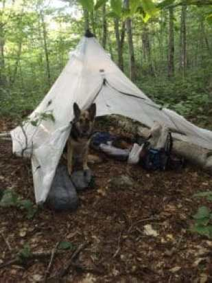 A German Shepherd lies in a small tent surrounded by gear on the Vermont Long Trail