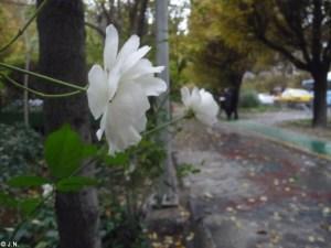 15_11_18-Iran_3-097
