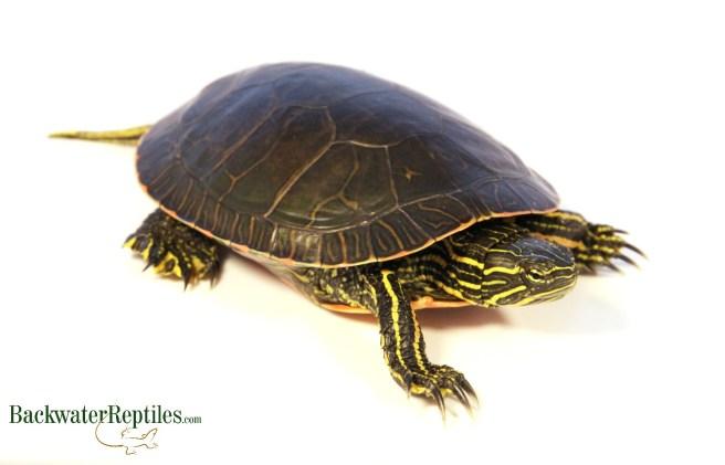 common reptile illnesses