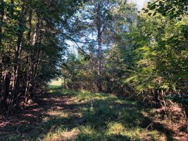 smith county ms timberland for sale