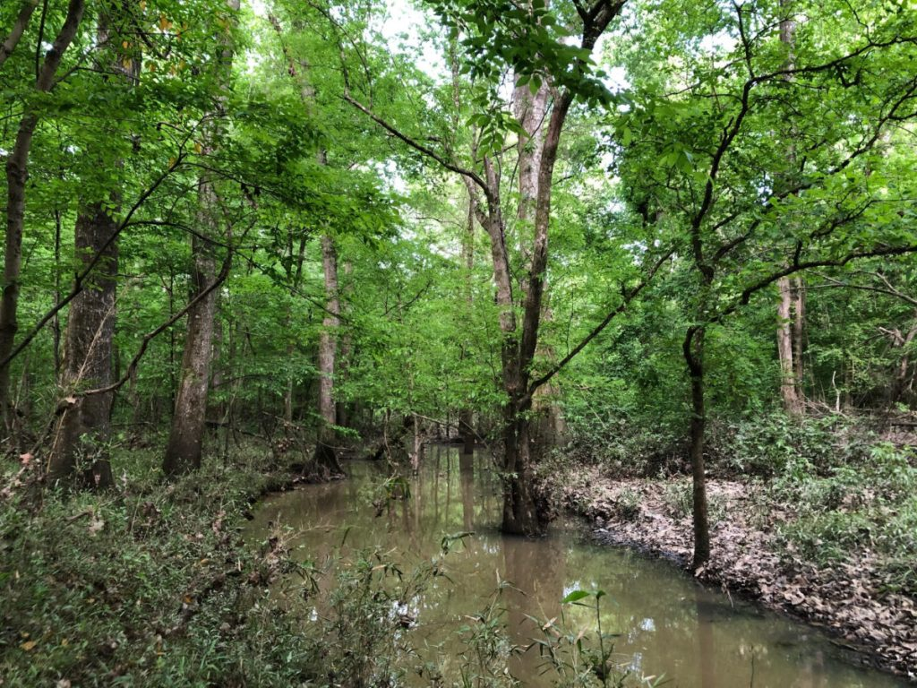 rural hunting land in scott county ms