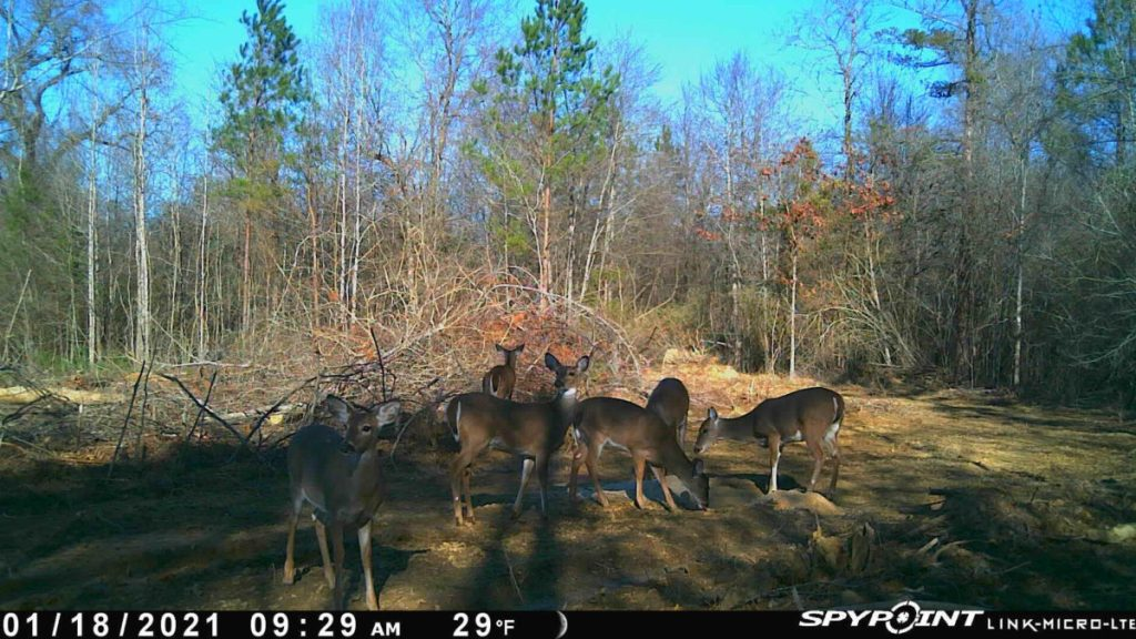hunting land for sale madison county ms