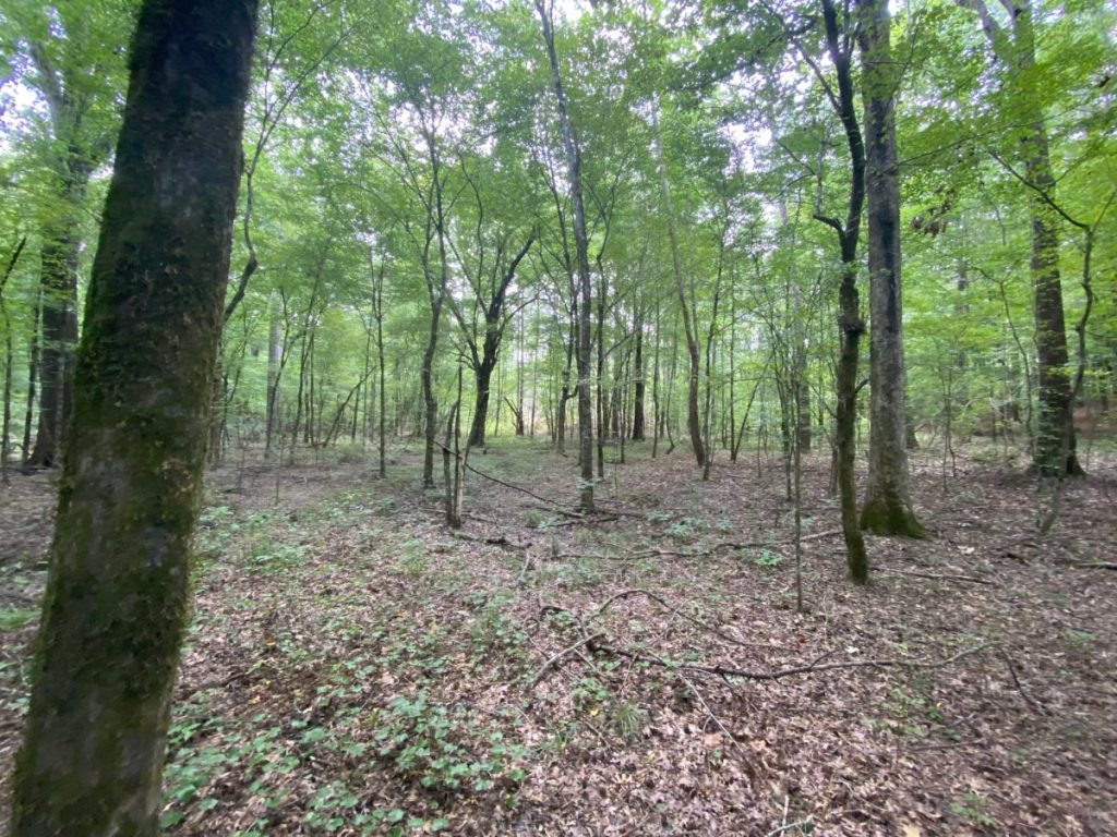 buy hunting land madison county ms