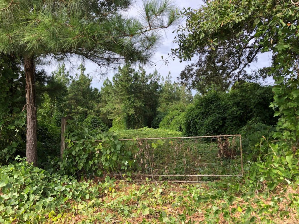 land for sale in neshoba county ms