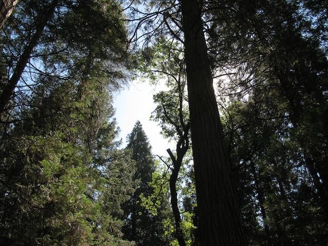 1 - trees