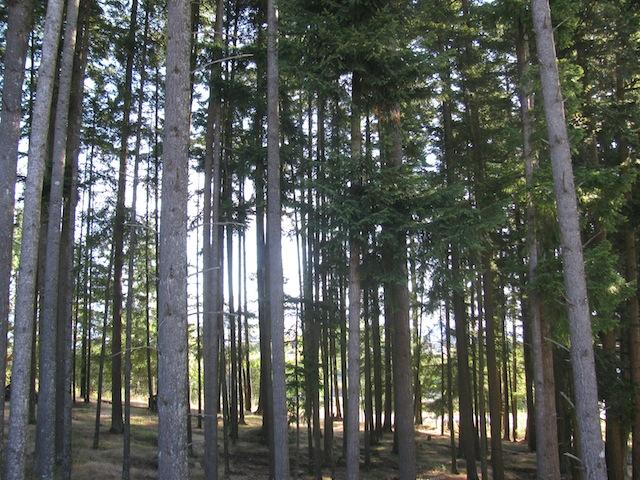 1 - talltrees