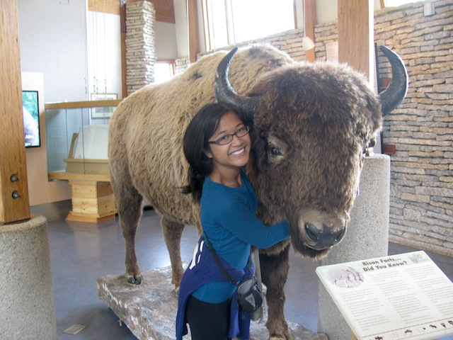 The closest I'll get to a real bison. Haha. I feel so small.
