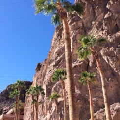 Palm trees at Hoover Dam