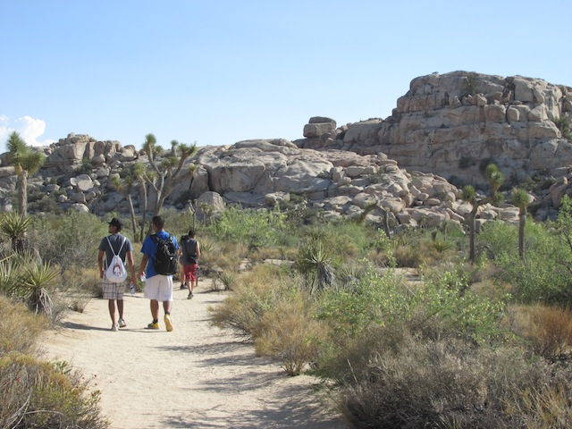 5 - joshua-tree-national-park