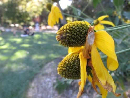 6 - descanso_gardens