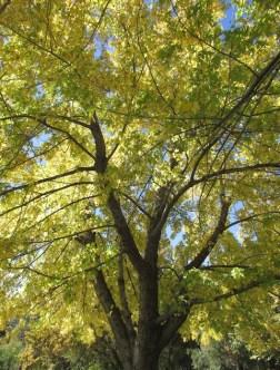 2 - oak_glen_california