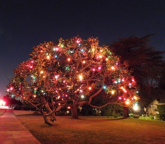 5 Awesome Christmas Light Displays In Los Angeles