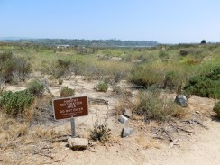 upper_newport_bay_nature_preserve_orange_county12