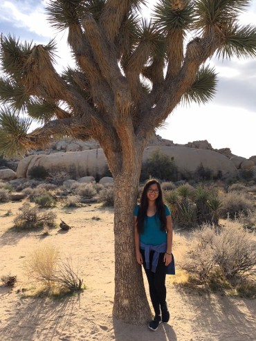 $500 road trip, Joshua Tree National Park, Zion National Park, Death Valley National Park