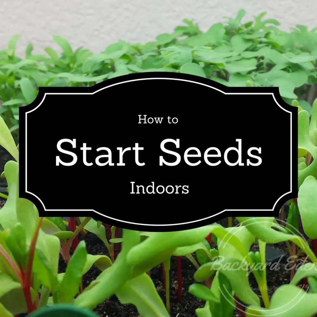 How to start seeds indoors, starting seeds, seeds, Backyard Eden, www.backyard-eden.com