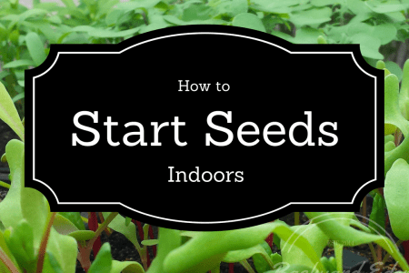 How to start seeds indoors, starting seeds, seeds, Backyard Eden, www.backyard-eden.com