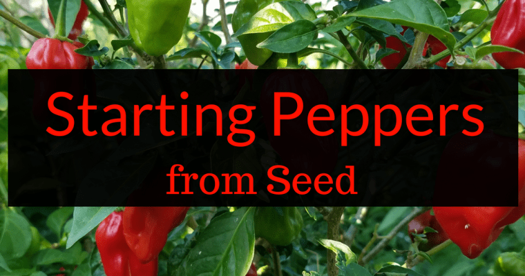 Starting Peppers