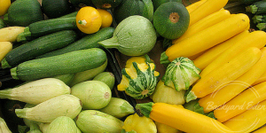 Why Organic Gardening, Organic Gardening, growing squash, Backyard Eden, www.backyard-eden.com, urban farmer, urban gardener