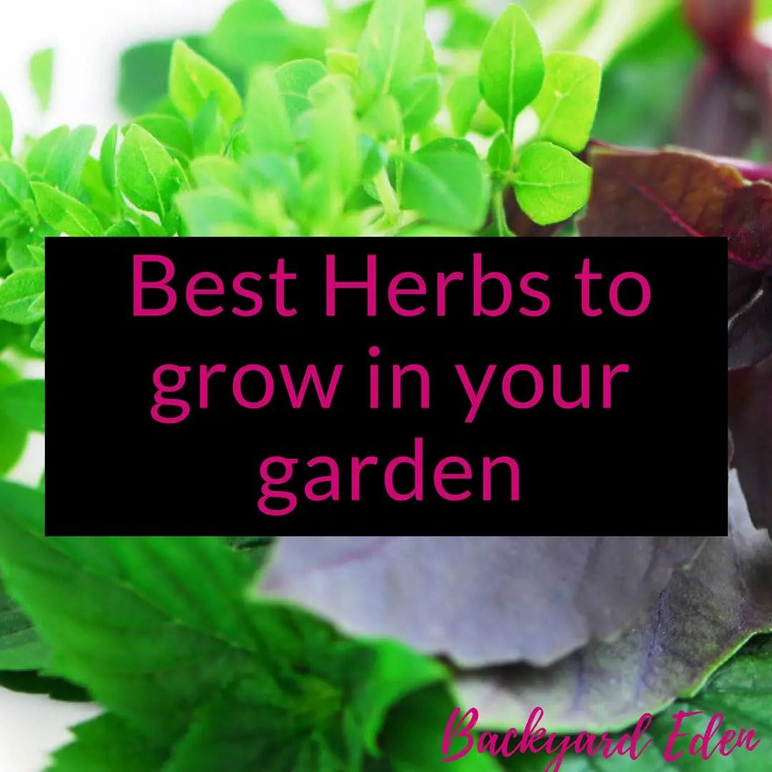 Best herbs to grow in your garden, grow herbs, best herbs, Backyard Eden, www.backyard-eden.com, www.backyard-eden.com/best-herbs-to-grow