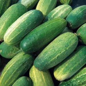 National Pickling Cucumber, Backyard Eden, www.backyard-eden.com