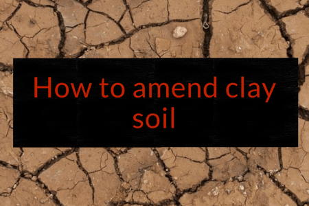 How to amend clay soil, clay soil, Backyard Eden, www.backyard-eden.com, www.backyard-eden.com/how-to-amend-clay-soil