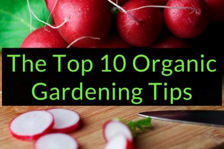 The Top 10 Organic Gardening Tips, Organic Gardening Tips, Backyard Eden, www.backyard-eden.com, www.backyard-eden.com/top-10-organic-gardening-tips