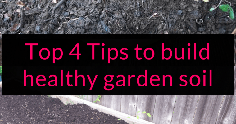 Top 4 Tips to build healthy garden soil