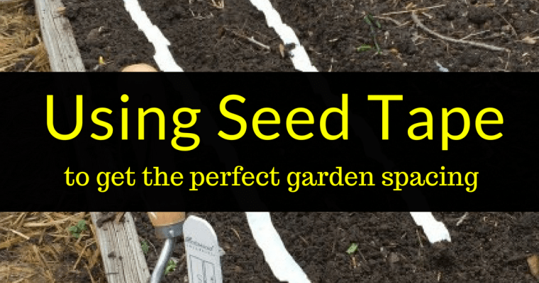 Using seed tape to get the perfect garden spacing