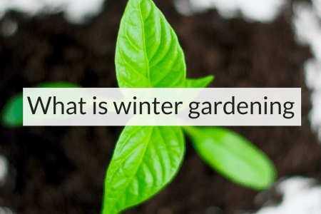 What is winter gardening, winter gardening, Backyard Eden, www.backyard-eden.com, www.backyard-eden.com/what-is-winter-gardening