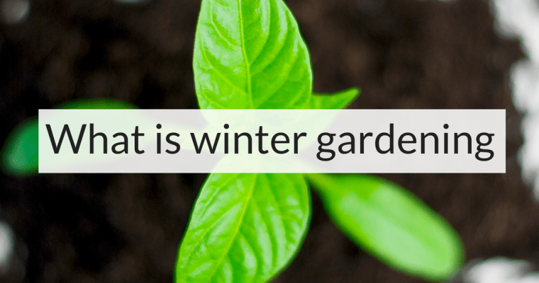 What is winter gardening