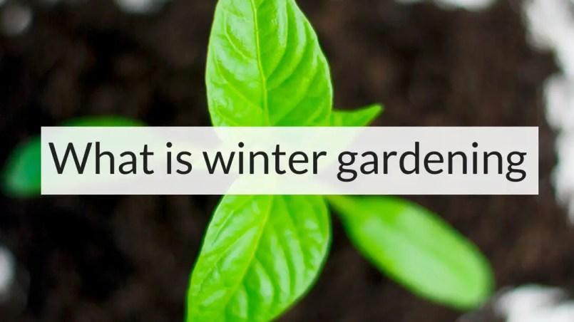What is winter gardening, winter gardening, Backyard Eden, www.backyard-eden.com, www.backyard-eden.com/what-is-winter-gardening