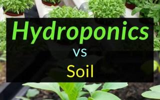 Hydroponics vs soil, Hydroponics, Backyard Eden, www.backyard-eden.com, www.backyard-eden.com/hydroponics-vs-soil