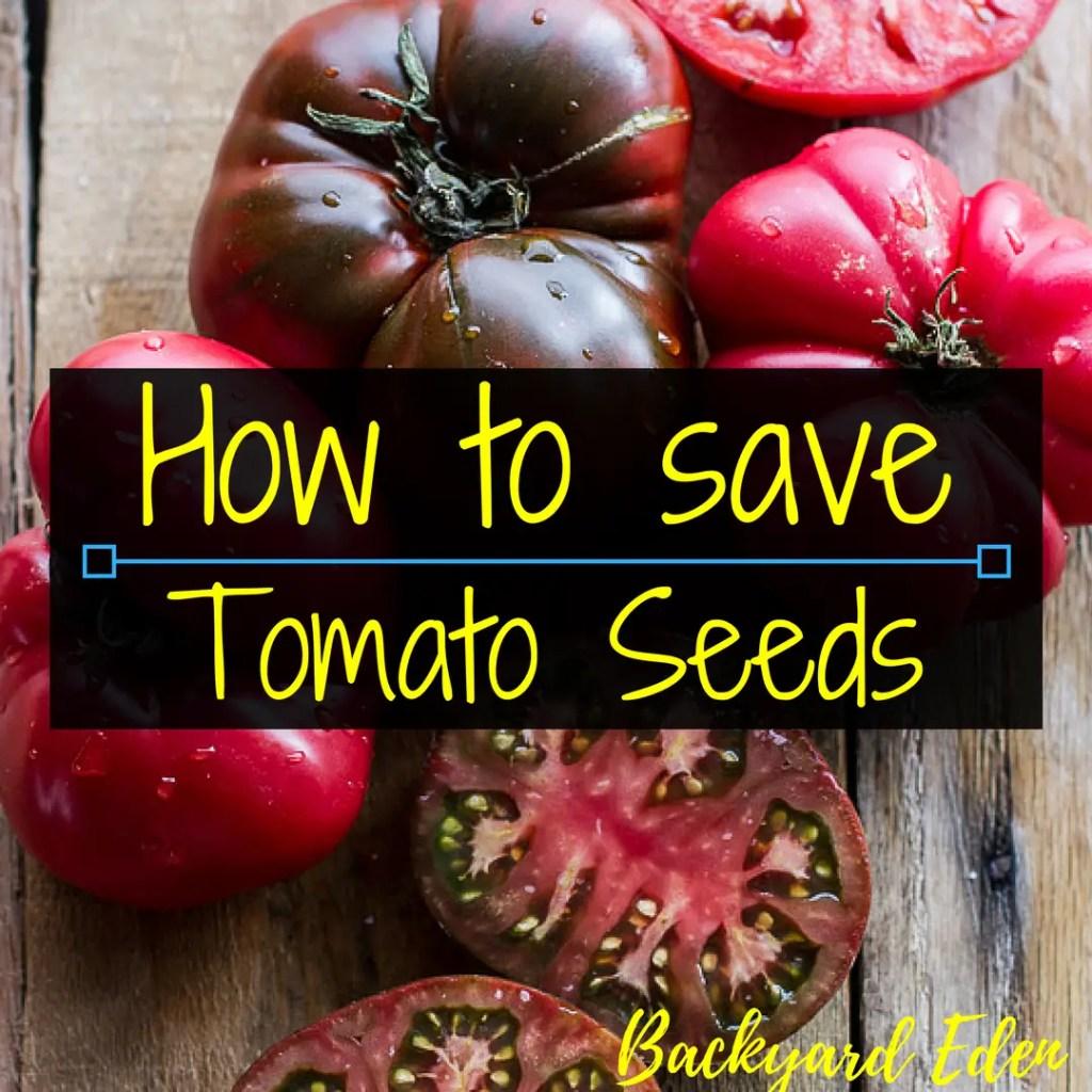 How to save tomato seeds, saving seed, saving tomato seeds, Backyard Eden, www.backyard-eden.com, www.backyard-eden.com/how-to-save-tomato-seeds